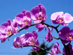 cvety, квіти, робочий