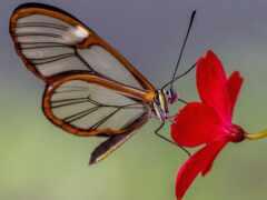 бабочка, glass, цветы