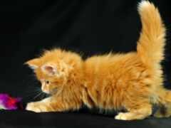 котенок, play, little