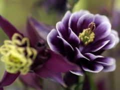 весна, лепестки, cvety