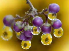 makryi, drop, природа
