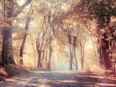 satie, trees