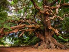 отдушка, дерево