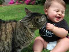 animal, кот, children