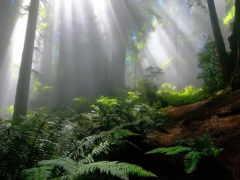 enchanted, лес, free