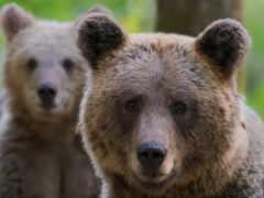 зелёный, animal, медведь