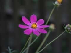 картинка, растение, garden