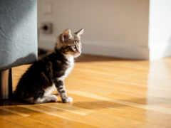 котята, взято, похожие