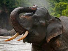 слоны, слон, zhivotnye Фон № 107899 разрешение 1900x1260