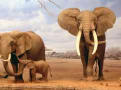они, слоны, очень