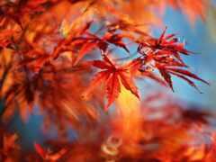 осень, klnyi, лист