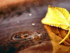 осень, макро, лужа