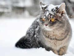 снегопад, петербурге, winter