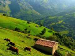 взгляд, hills, трава