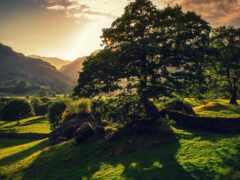 природа, landscape, лес
