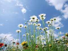 цветы, fiore, fiorus