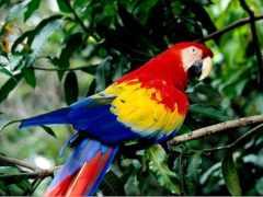 какаду, род, попугаи