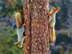 дерево, протеин, oir