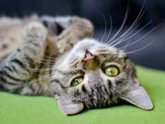 день, кот, коты