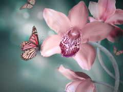 орхидеи, орхидея, cvety