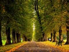 осень, аллея, природа