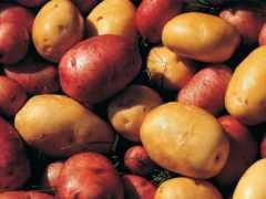 картофель, оптом, объявления