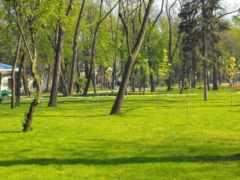 стриженый, газон, house