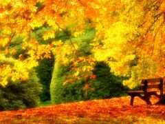 скамейка, дерево, spectacular