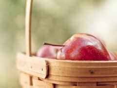 apple, песочница, корзина