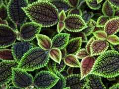 текстура, leaf, textura