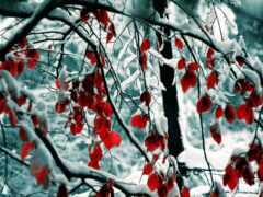 winter, природа, лист