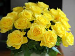 роза, yellow, цветы