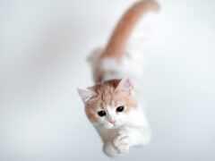кот, animal, прыжок
