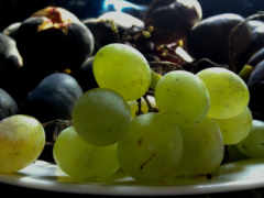 плод, seedless, установить