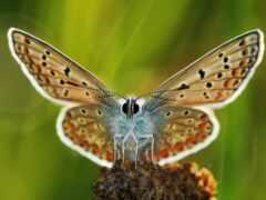 foot, крыло, бабочка