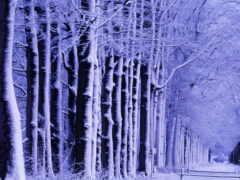 лес, winter, зимние