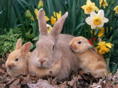 animal, rabbit