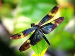 стрекоза, насекомое, бабочка