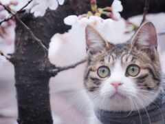 кот, котоматрица, narrow
