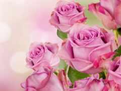 роза, розовый, букет