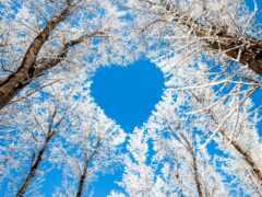 санкт, снег, сердце