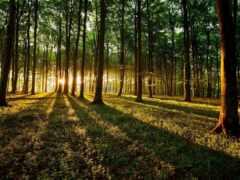 лес, sun, природа
