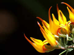 flower, сборник