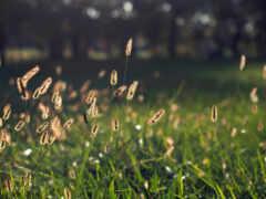природа, side, greenery