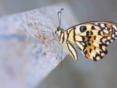lime, butterfly Фон № 26179 разрешение 1920x1080