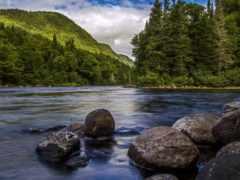 природа, горы, лес