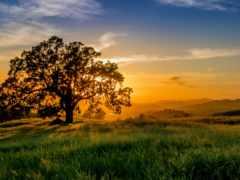 закат, природа, трава