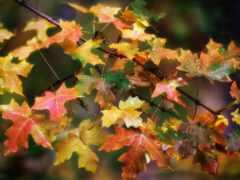 осень, leaf, коллекция
