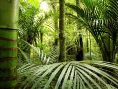 jungle, greenery, бамбук