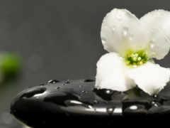 cvety, цветы, макро